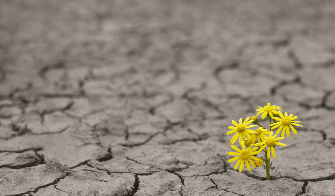 Recipe for Business Resilience